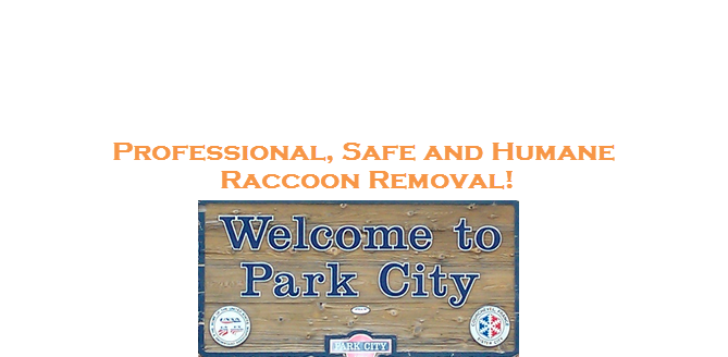 Raccoon Removal Park City Utah
