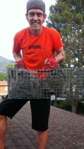 South Ogden Utah Animal Removal