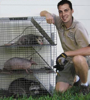 Raccoon Removal, Possum Removal, Armadillo Removal