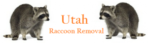 Utah Raccoon Removal